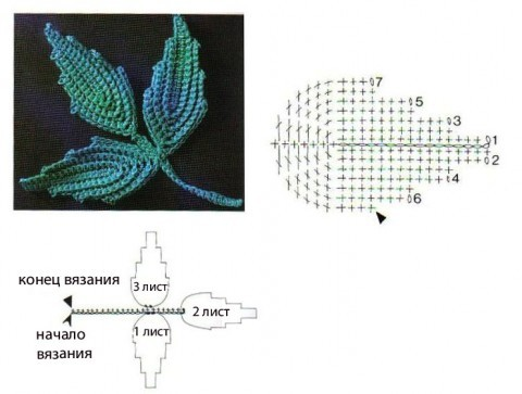 схема листьев
